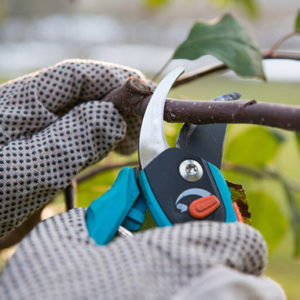 tree-pruning-cost