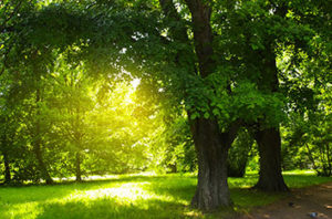 Best Trees To Plant In Arlington, TX