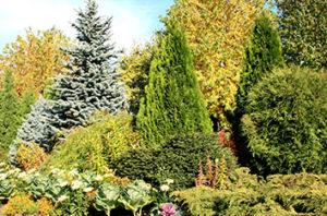 Best_Decorative_Trees_For_Dallas