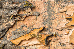 How_To_Get_Rid_Of_Termites_In_Trees_In_Fort_Worth