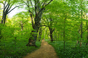 10_Best_Trees_To_Plant_In_Corpus_Christi