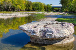 7 Best Trees To Plant In Round Rock