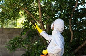 10_Keller_Tree_Pests_and_Diseases