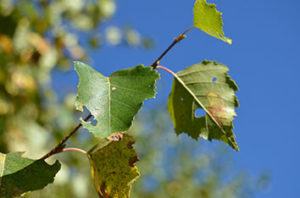 5 Pearland Tree Pests And Diseases