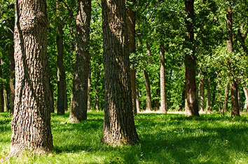 5_Shade_Trees_For_Lewisville