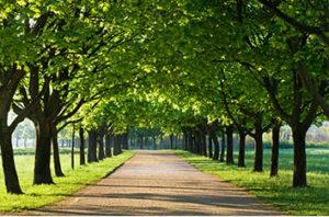Best Trees For Allen Texas
