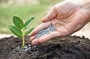 How_To_Properly_Fertilize_Trees_In_Keller