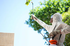 How To Stop Waco Tree Pests And Diseases
