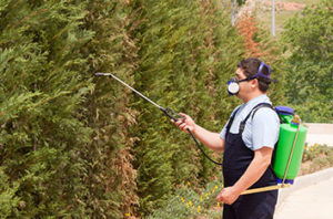 Most_Common_Conroe_Tree_Pests_And_Treatment