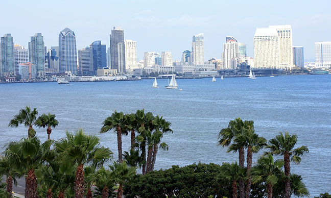 Are_palm_trees_native_to_San_Diego_