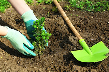 Best_Time_To_Plant_Trees_In_Texas