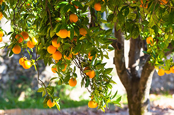 California_Citrus_State_Historic_Park_-_How_To_Visit