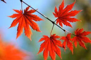 Santa Cruz Trees Guide For Homeowners
